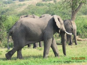 Our behavior was the trigger for the elephants to decamp