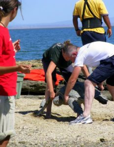 Sea turtle tracking