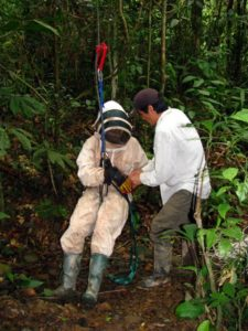 Bee suit de rigueur to climb to a macaw's nest