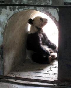 Panda enclosure (China)