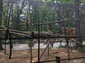Patas Monkeys (US)