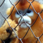 When Snapping Do Help Captive Animals