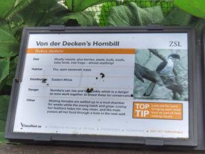 Hornbill (UK)