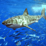 Should I Worry About Shark Attacks?