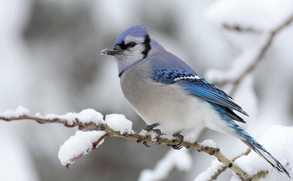 ☃️ Closer To Nature » Winter Program