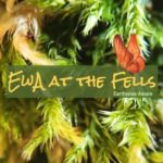 Together, Celebrating Biodiversity All Year Long at The Fells